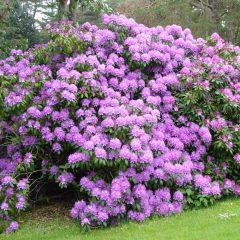 18 Blüten Pracht