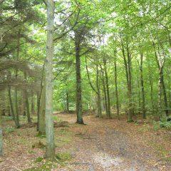 15 Wald