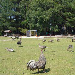 19 Spielplatz in der Vogelkoje